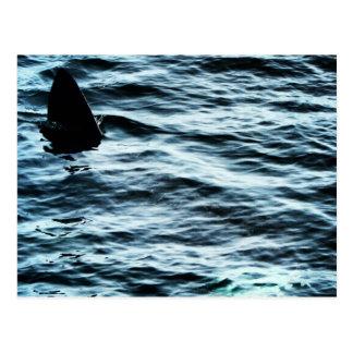 Basking shark postcard