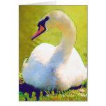 Basking Swan Greeting Cards