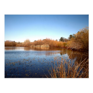 Bass Pond One Postcard
