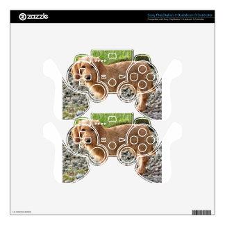 Basset Fauve de Bretagne Dog Skins For PS3 Controllers