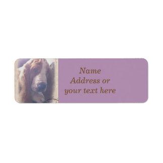 Basset Hound Address Label