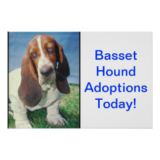 Basset Hound Adoption Poster