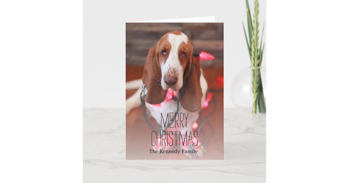 basset hound, christmas, christmas lights holiday card | Zazzle.com