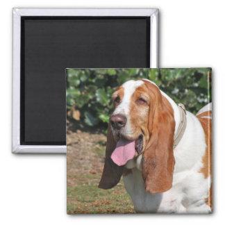 Basset hound dog magnet, present idea magnet