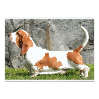 Basset Hound full.png Card