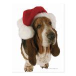Basset hound in Santa hat Postcard
