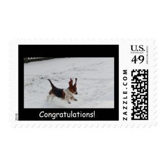 Basset hound in snow on congratulatory stamp