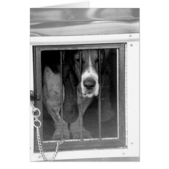 basset hound jail card