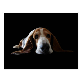 Basset Hound lying down Postcard