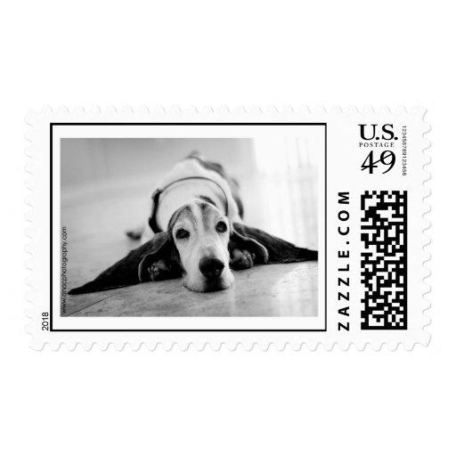 Basset Hound Medium size Postage