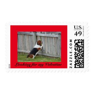 Basset hound on funny Valentine's Day stamp