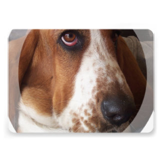 Basset Hound Personalized Announcement
