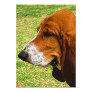 basset-hound.png card
