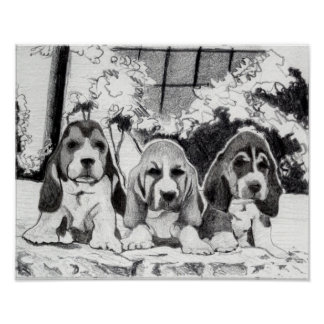 Basset Hound Puppies Dog Portrait Poster