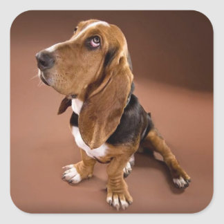 Basset Hound Puppy Dog Sticker / Label