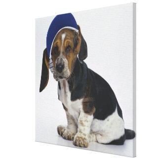 Basset Hound Puppy With Visor Canvas Print