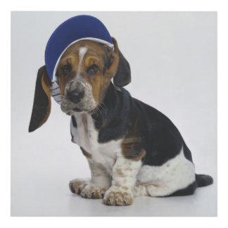 Basset Hound Puppy With Visor Panel Wall Art