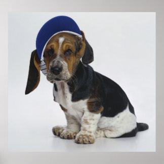 Basset Hound Puppy With Visor Poster