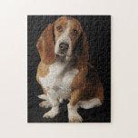Basset hound puzzles