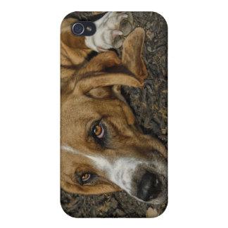 Basset Hound Rescue Dog Mable 4 Universal iPhone 4 Cover