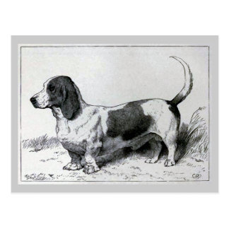 """Basset Hound"" Vintage Dog Illustration Postcard"