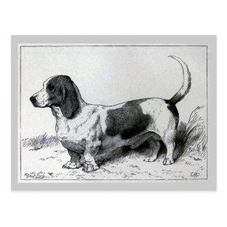 """""""Basset Hound"""" Vintage Dog Illustration Postcard"""