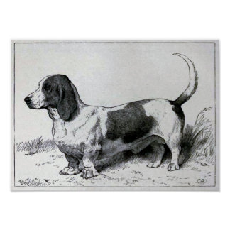 """Basset Hound"" Vintage Dog Illustration Poster"