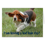 """Basset Hound with """"bad hair day"""" greeting card"""