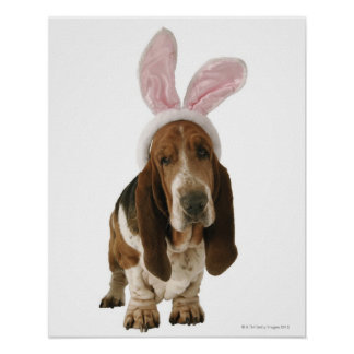 Basset hound with bunny ears poster