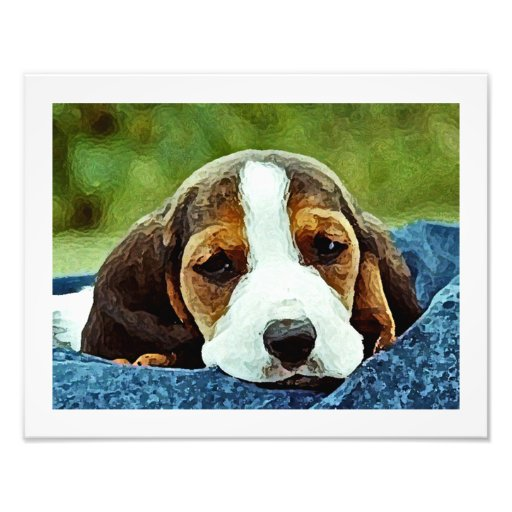 Basset Puppy Resting - Brown Black and White Photo