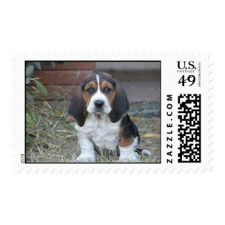 basset puppy stamps