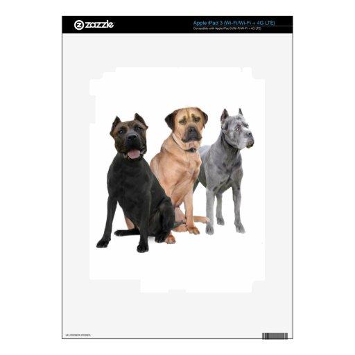 Bastón Corso tres Pegatina Skin Para iPad 3