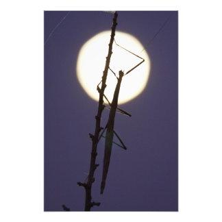 bastón y Luna Llena en Tejas del sur, los E.E.U.U. Fotografía
