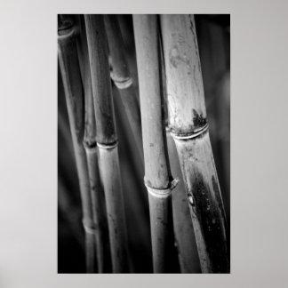 Bastones de bambú en blanco y negro póster
