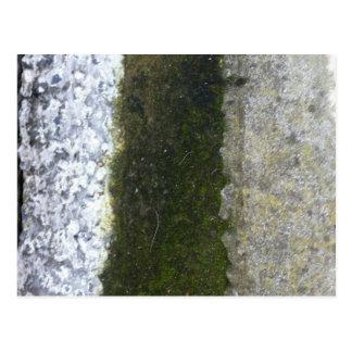 Basura del canal -- Limo con el canal concreto Tarjetas Postales