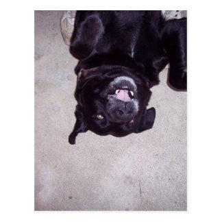 BAT-DOG POSTAL