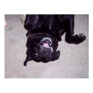BAT-DOG POSTCARD