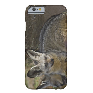 Bat-eared Fox, Otocyon megalotis, Masai Mara Barely There iPhone 6 Case