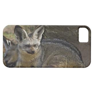 Bat-eared Fox, Otocyon megalotis, Masai Mara iPhone SE/5/5s Case