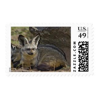 Bat-eared Fox Otocyon megalotis Masai Mara Postage Stamp