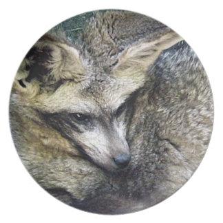 Bat Eared Fox Photo Closeup Kansas City Zoo Plates