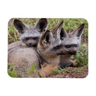 Bat-Eared Foxes, Serengeti National Park Magnet