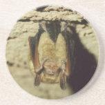 Bat Sandstone Coaster