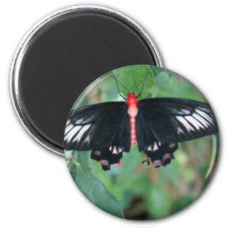 Bat Wing Butterfly Magnet