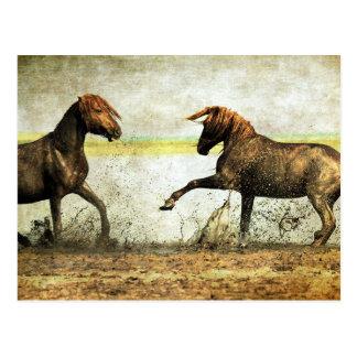 Batalla del mustango postales