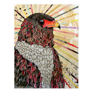 Bateleur Eagle Postcard