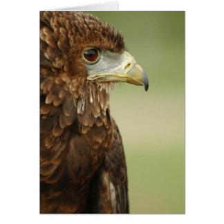 Bateleur Eagle Terathopius Ecaudatus Cards