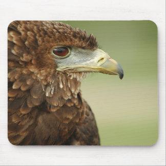 Bateleur Eagle Terathopius Ecaudatus Mouse Pads