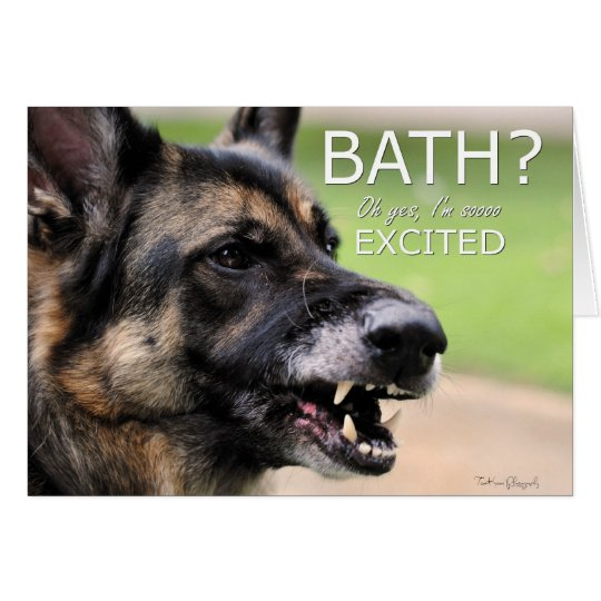 BATH: German Shepherd Dog Greeting Card