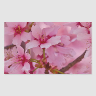 Bathed in Pink Japanese Cherry Blossoms Rectangular Sticker